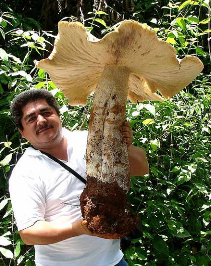 Каким наш мир был бы без грибов?