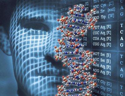 Генетическая карта мозга