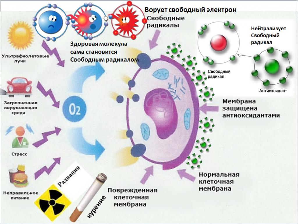 Что происходит с иммунной системой по мере нашего старения?
