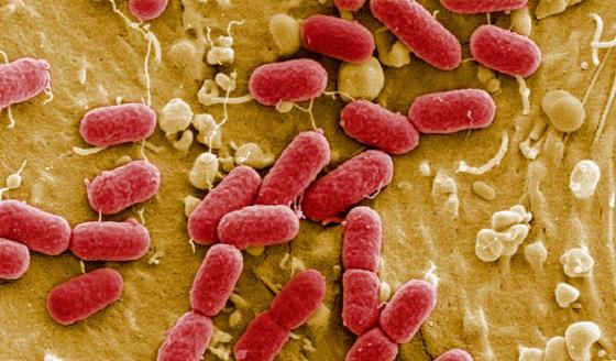 Бактерии снижающие аппетит