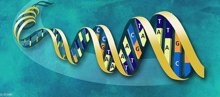 Расшифровка нашего генома