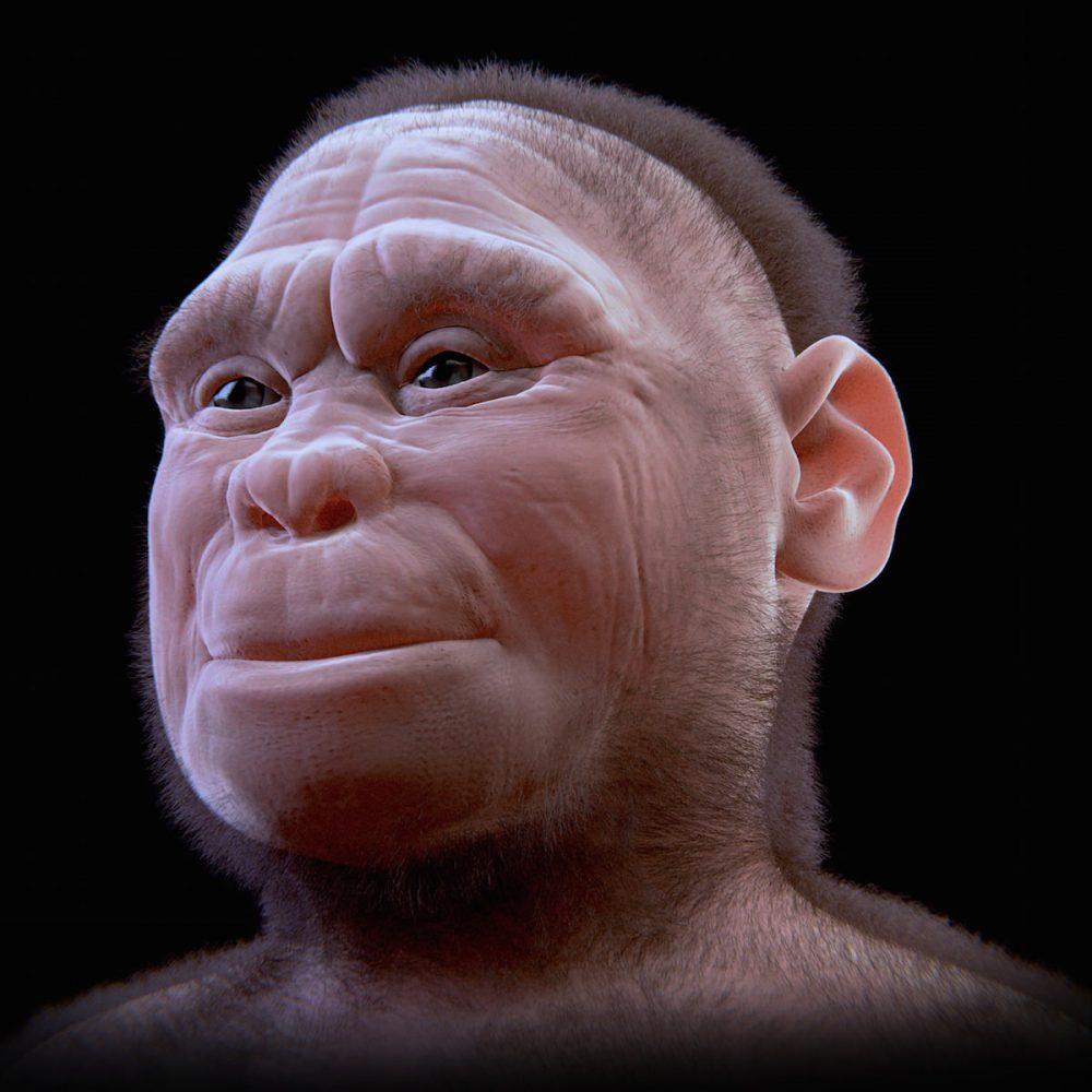 Человек флоресский (Homo floresiensis)