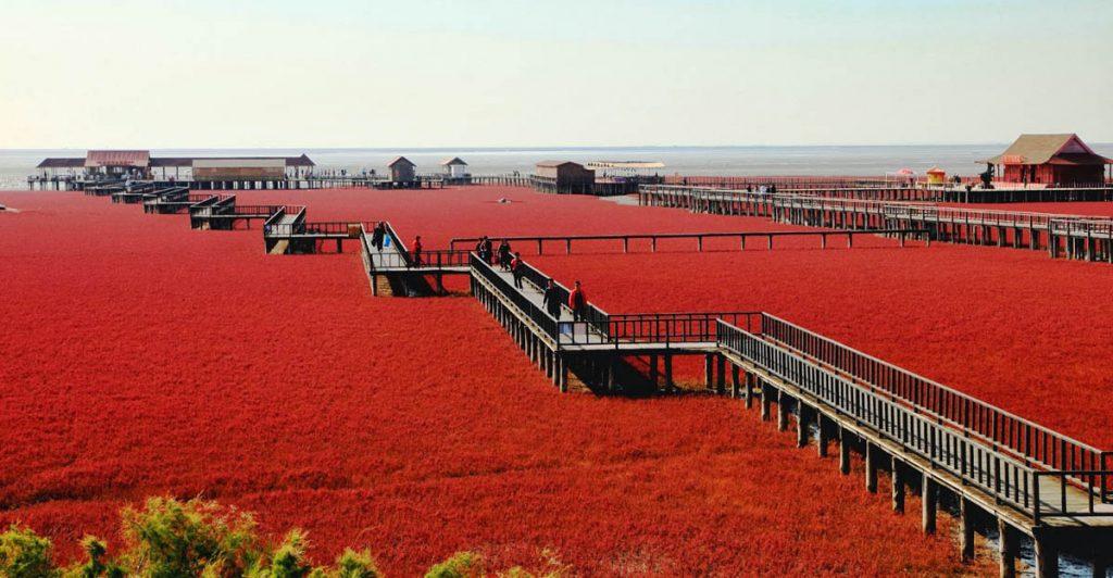 «Красный пляж», Паньцзинь, Китай