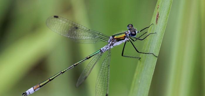 Отряд стрекозы (оdonata)