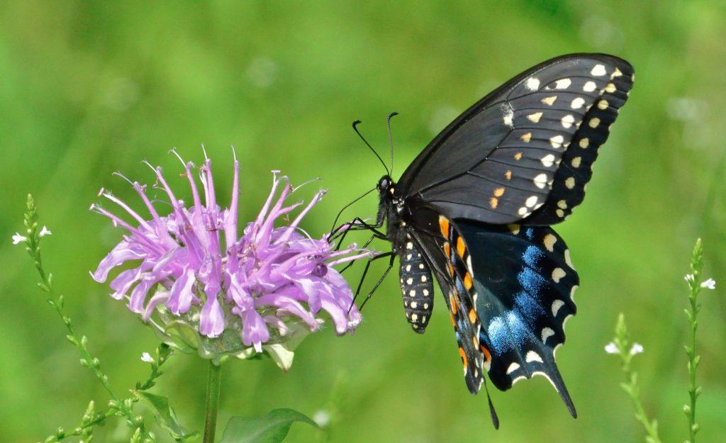 Отряд чешуекрылые, или бабочки (Lepidoptera)