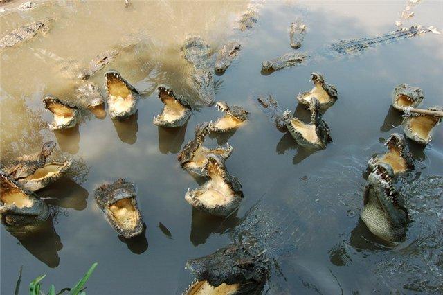 Озеро Крокодилов