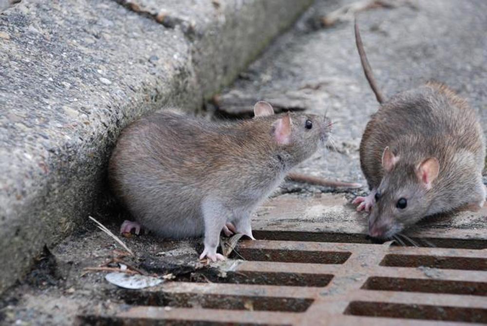 Городские животные - новая ступень эволюции?