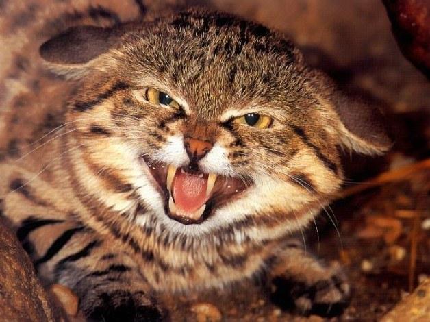 Происхождение домашней кошки