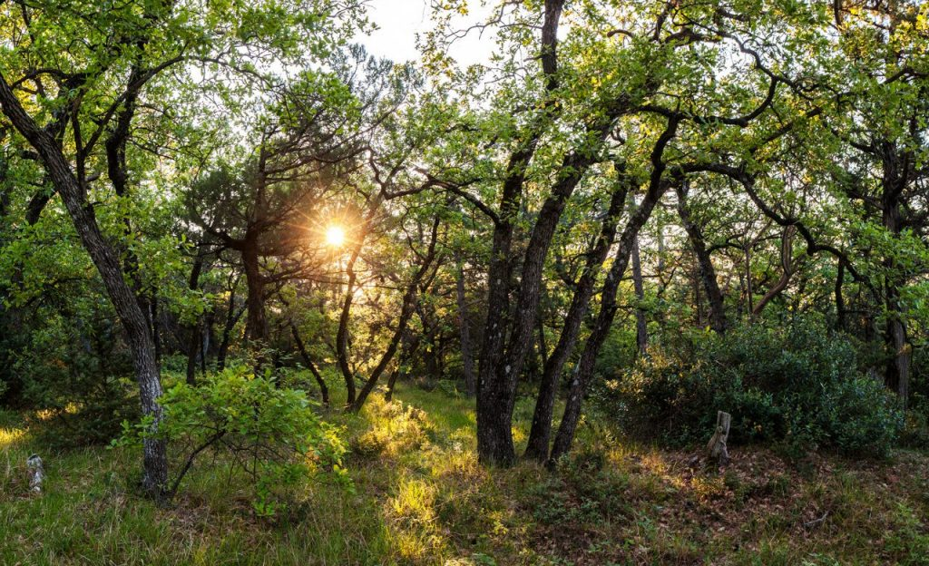 Субтропические леса Средиземья