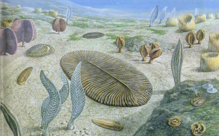 Первые живые обитатели земли появились
