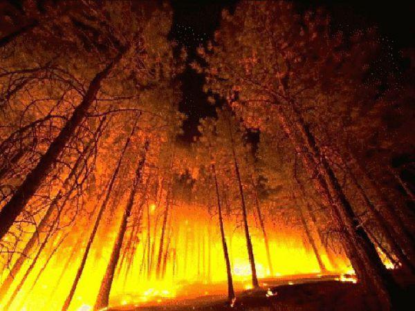 Пожары в каменноугольный период