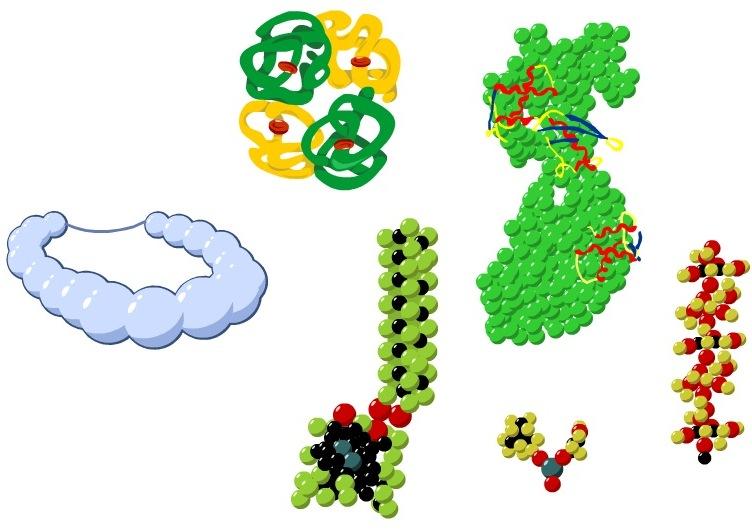 Роль белков для живого организма