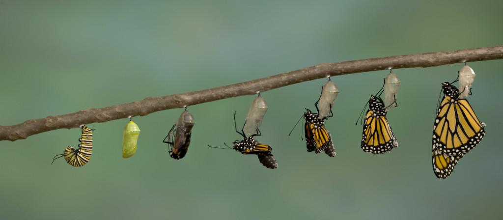 Метаморфоз у животных и насекомых