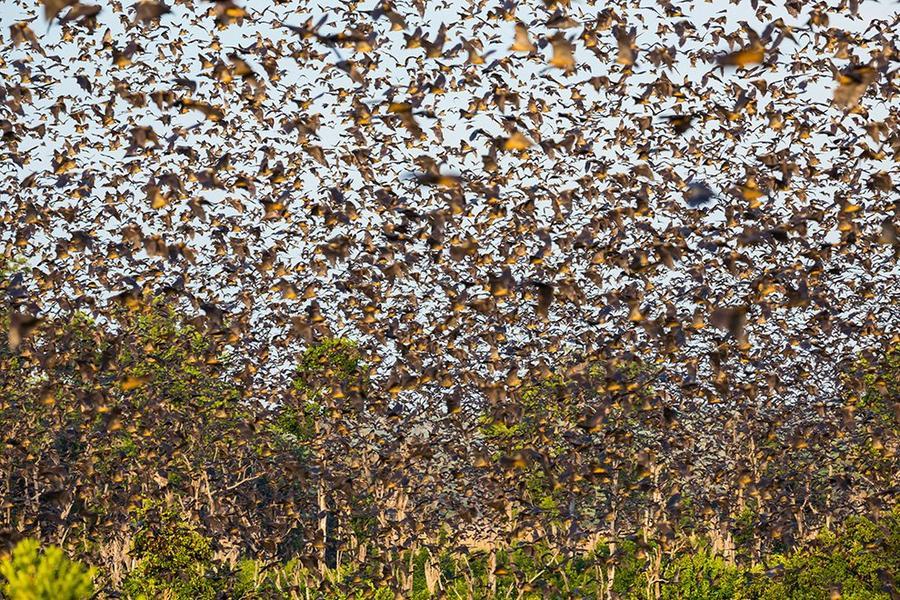 Миграции насекомых