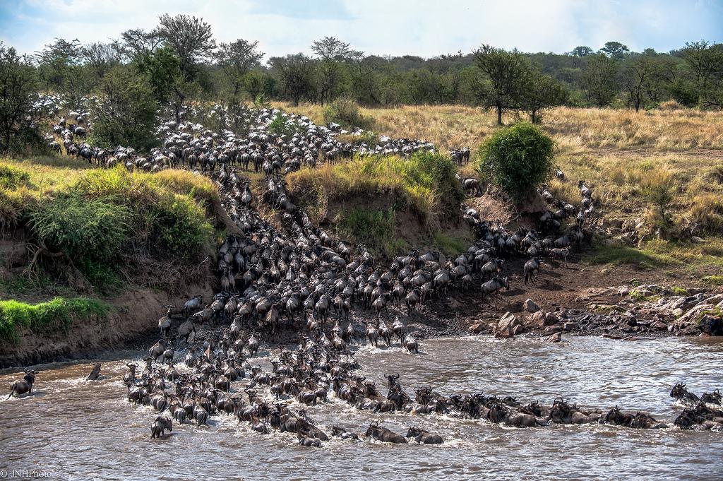 Наземные миграции животных