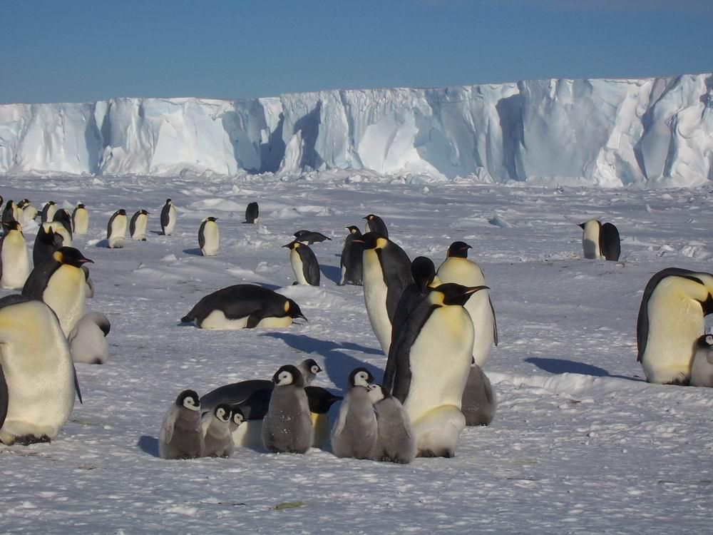 Как растения и животные приспособились к холоду