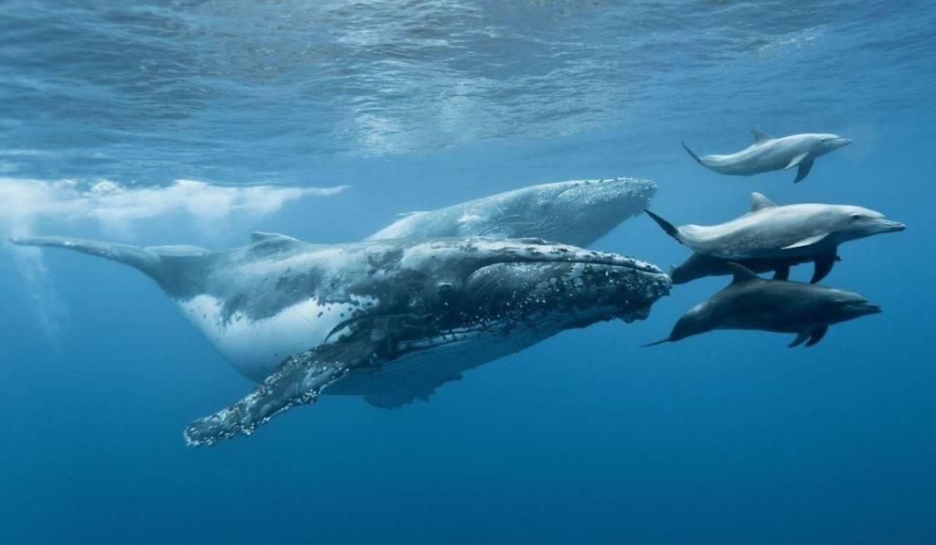 Путешествие животных по морю