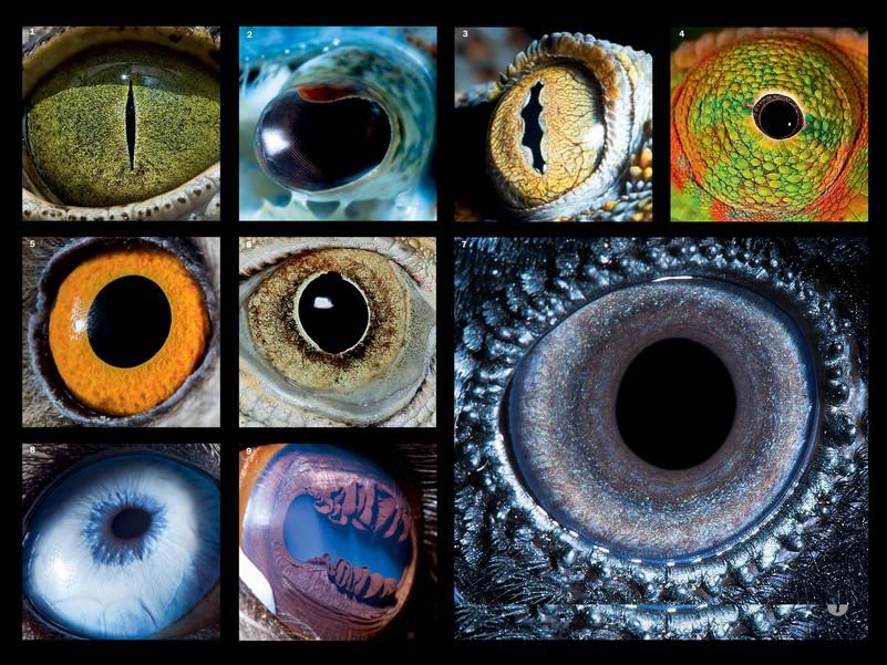 Зрение у животных