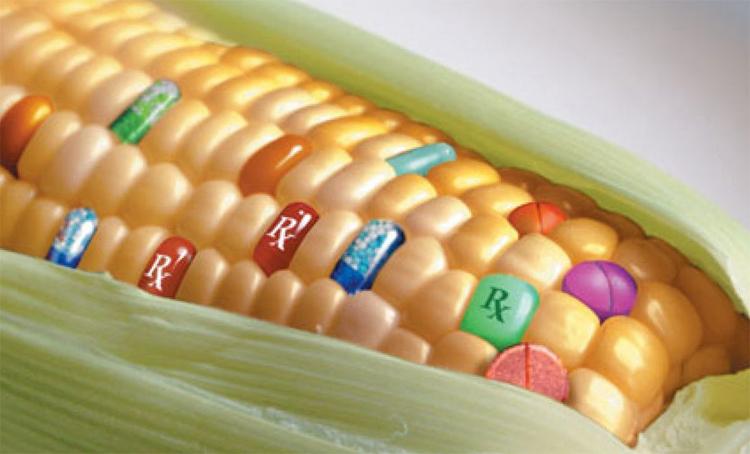 ГМО спасут человечество от голода