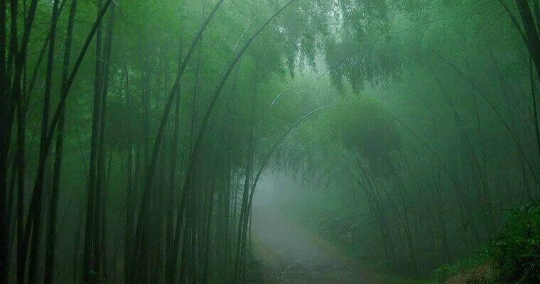 Загадка Лощины черного бамбука