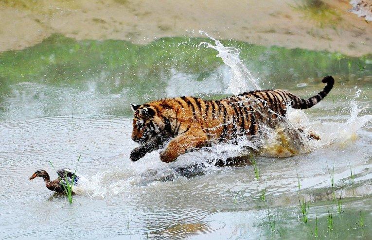Как охотятся животные