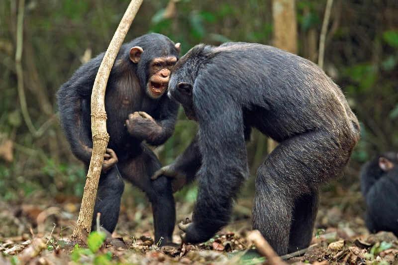 Общение животных с помощью звуков