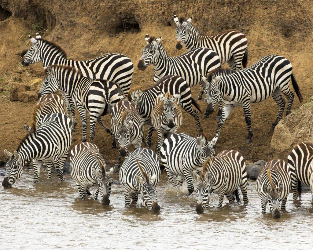 Средства защиты от хищников у животных