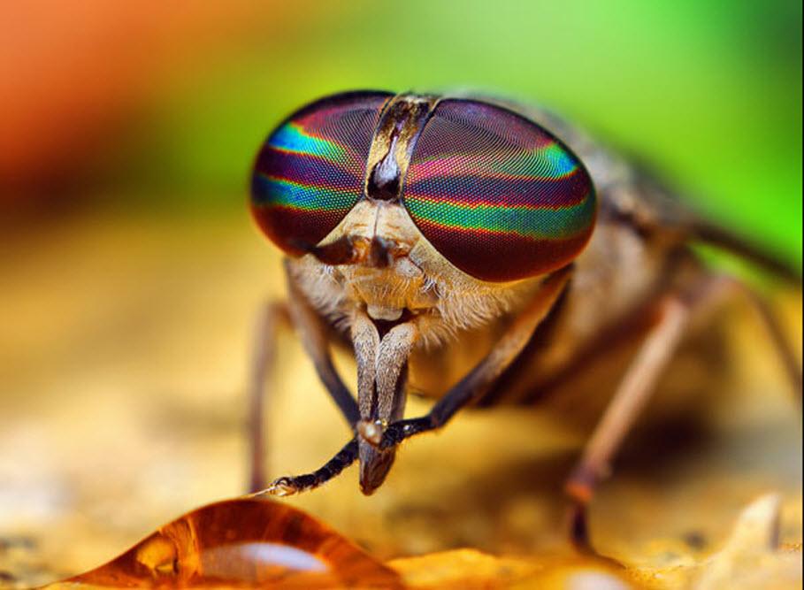 Сложные глаза у насекомых