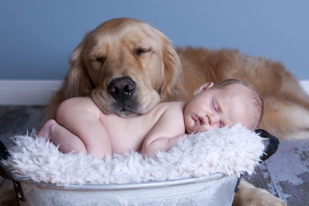Домашние животные предчувствуют заболевание хозяина