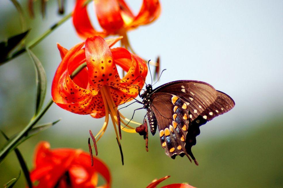 Бабочки или цветы: кто раньше?