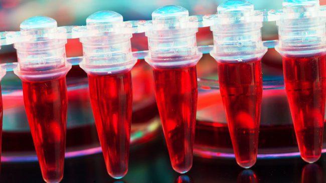 Ученые научились выращивать кровь