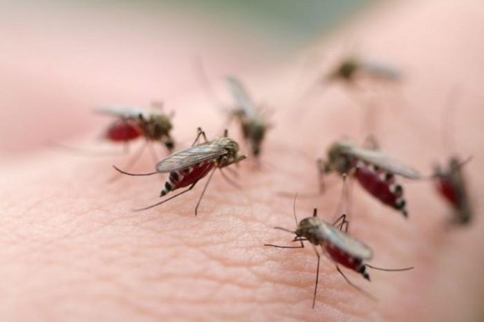 Ученые придумали как избавиться от комаров