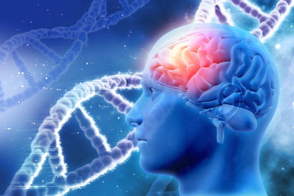Интеллект содержится в генах