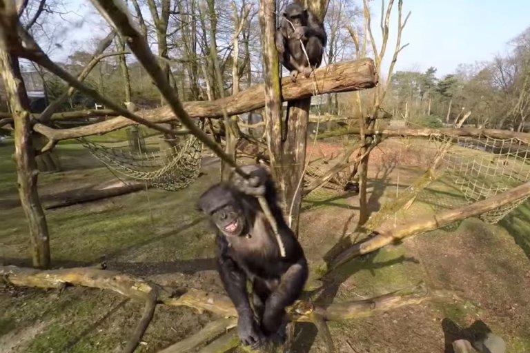 И тогда обезьяна взяла палку
