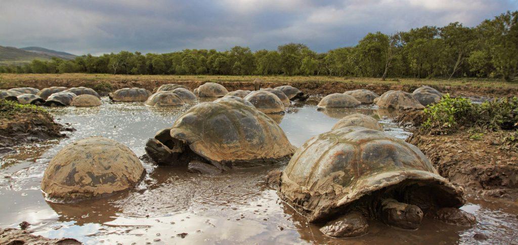 Галапагосы - «Черепашьи» острова