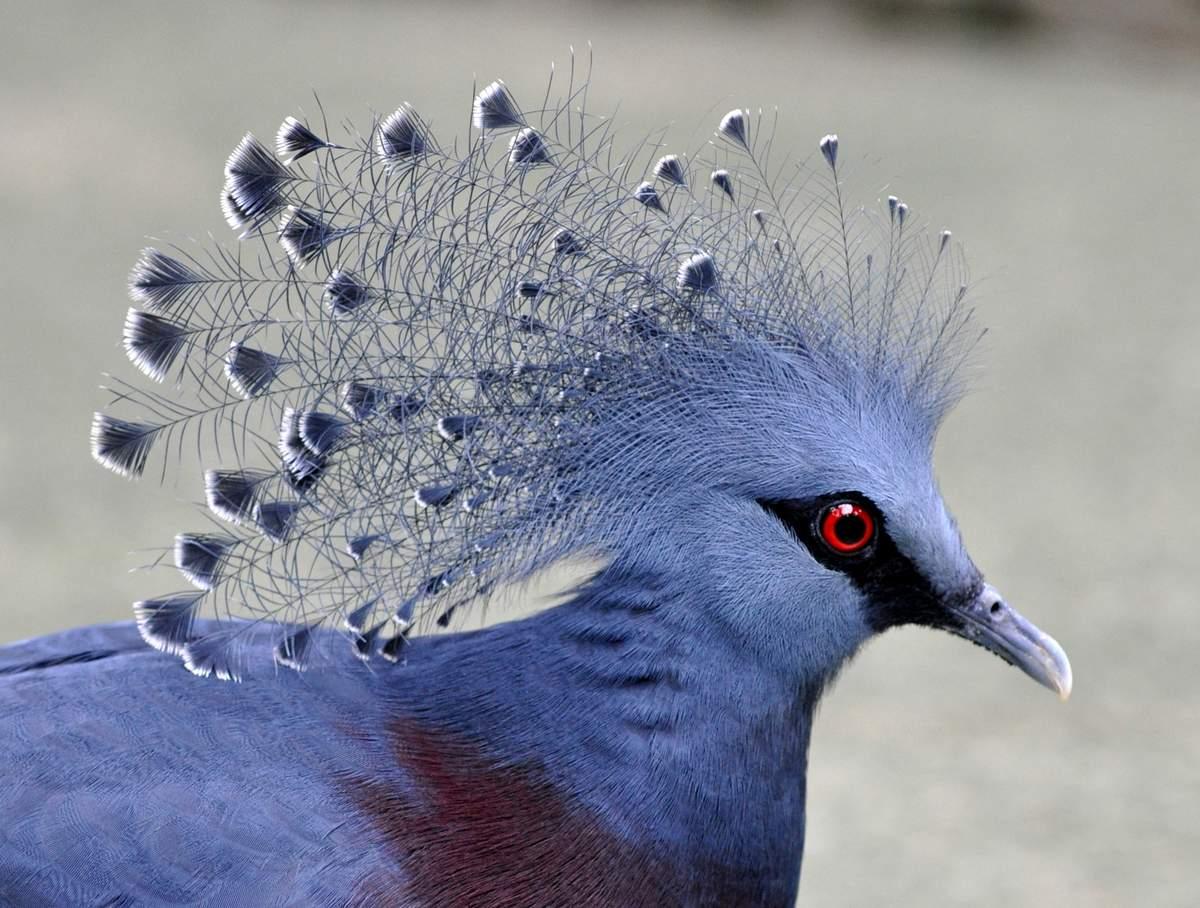 Топ 6 невероятно красивых животных