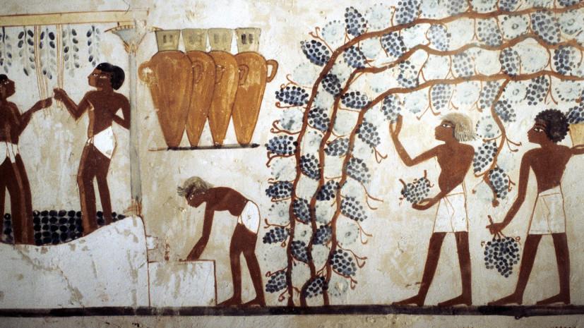 Виноделы Древнего Египта