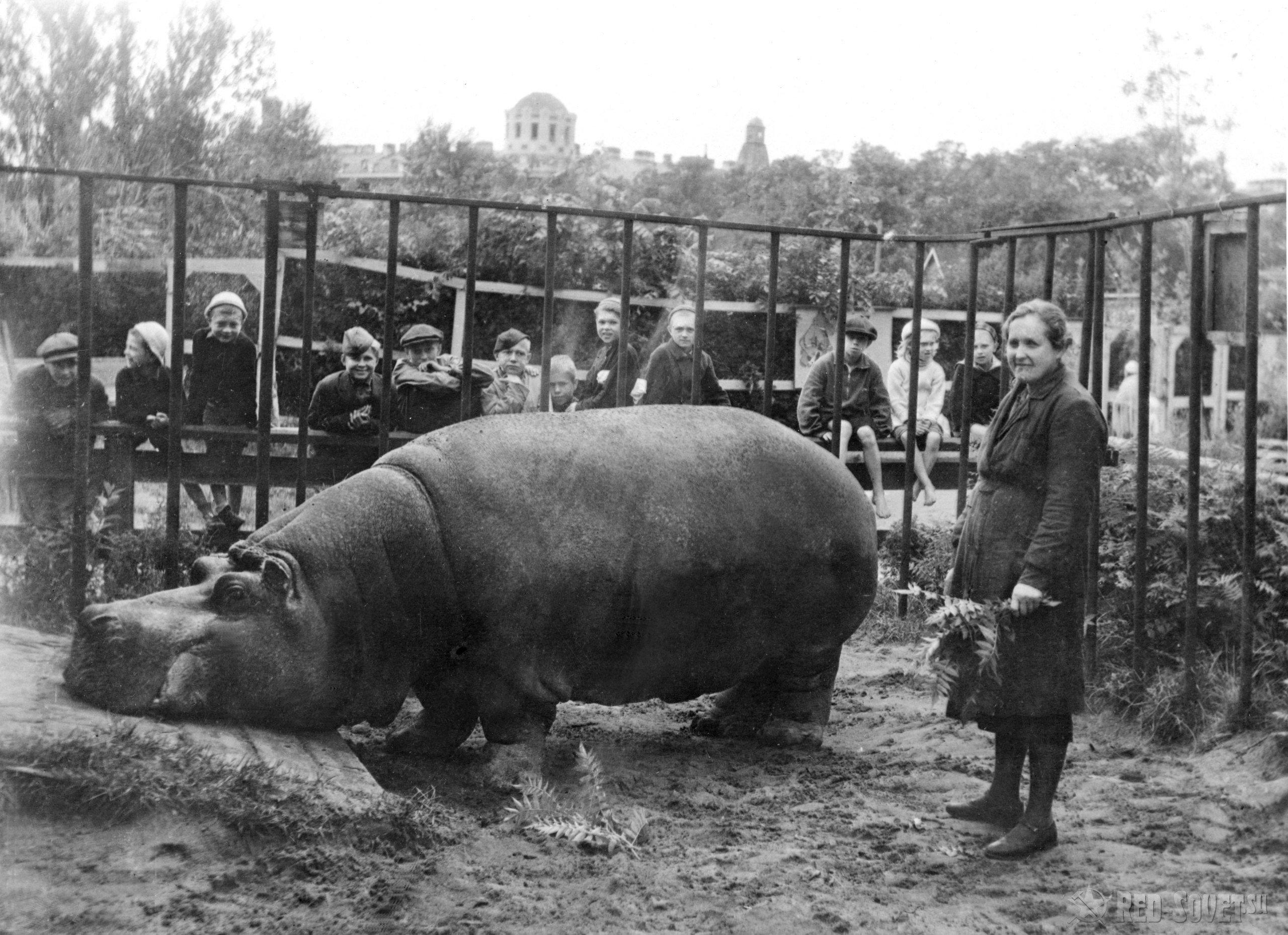 Как животные совершали подвиги и переживали военные тяготы вместе с людьми