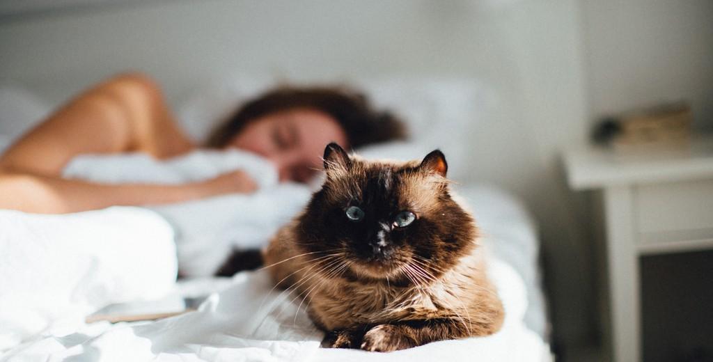 Сколько организму требуется для сна