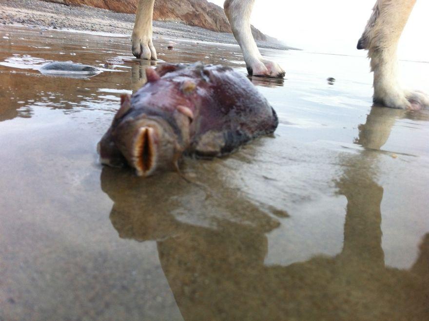 Атомный монстр: жуткое существо найдено на калифорнийском пляже