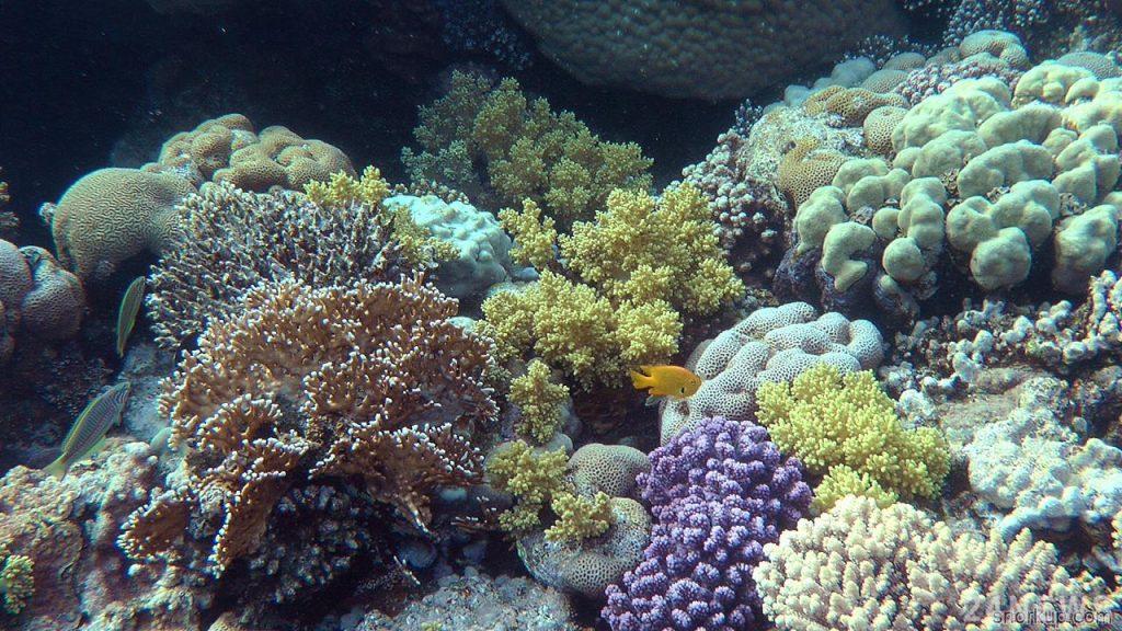 Тайские ученые придумали как спасти коралловые рифы