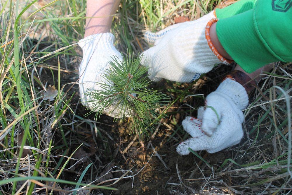 Сажайте леса!
