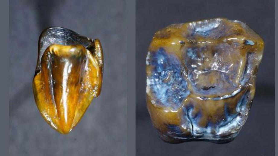 Зубы древнего предка человека возрастом 9,7 миллионов лет