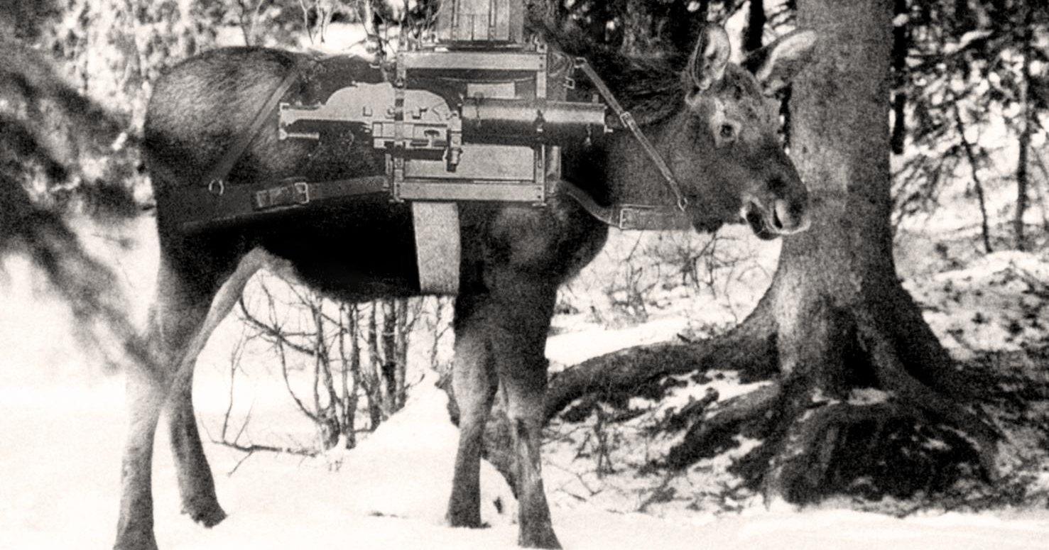 Советские боевые лоси во время «Зимней войны»