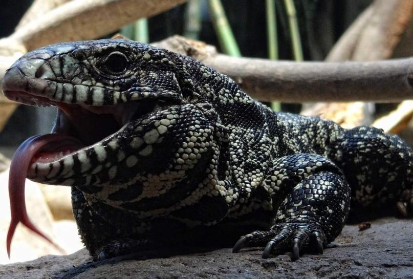 Почему эволюция наделила теплокровностью не всех животных, а только часть из них?
