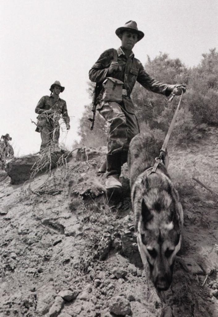 Четвероногие саперы в Афганистане. Как собаки спасали советских солдат