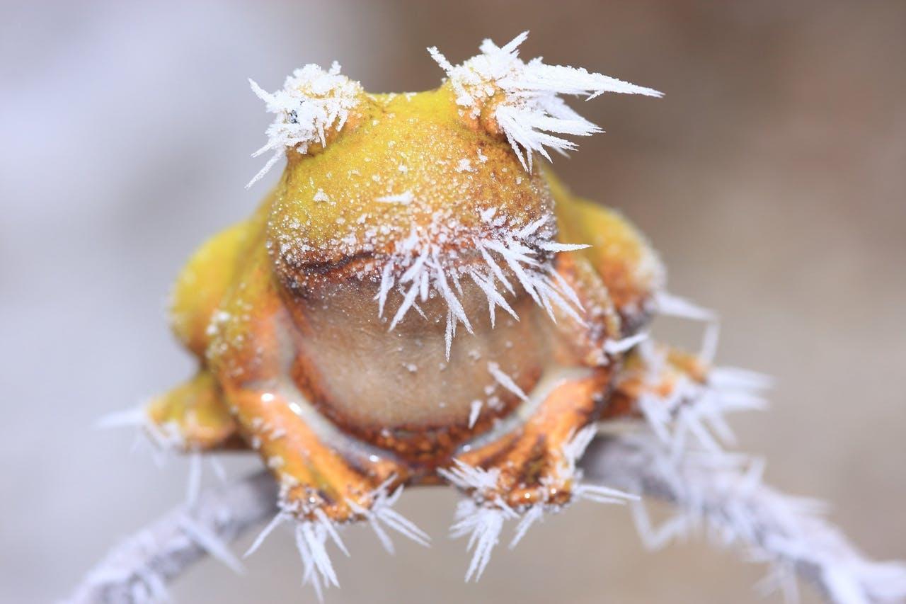Зимняя спячка у животных
