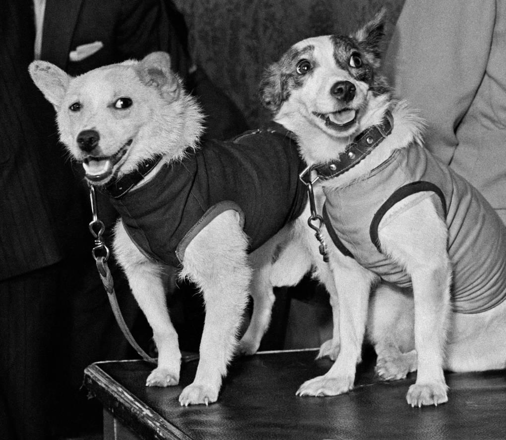 Как советские животные проторили человеку дорогу в космос