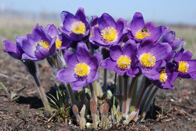 Нетерпеливые цветы