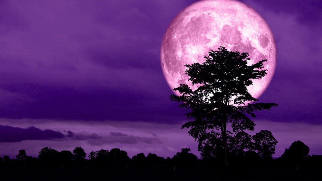 Розовое суперлуние: что это и как его увидеть?